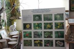 Фотовыставка Полевые цветы. Автор Л.Г. Сахарова